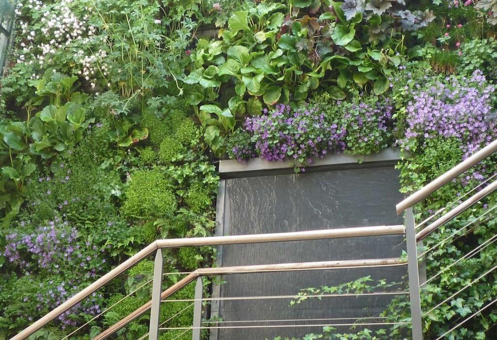 escalier plantes murales