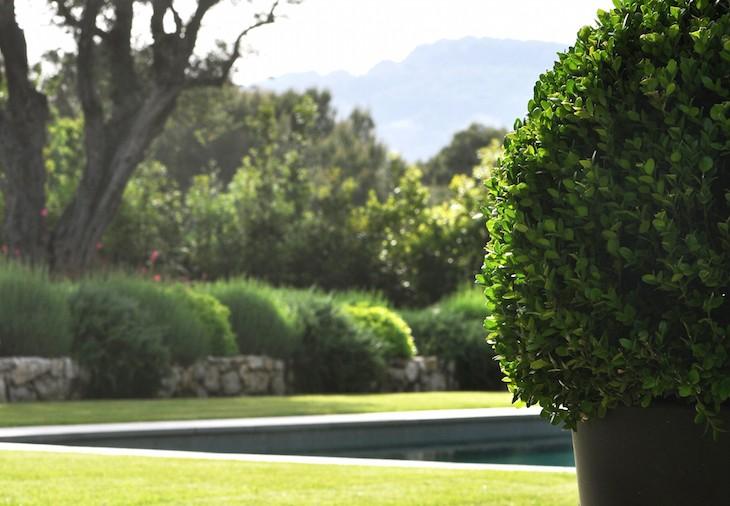 jardin piscine bassin Adonis Paysage